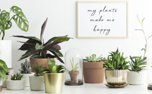 おしゃれ 観葉植物 鉢