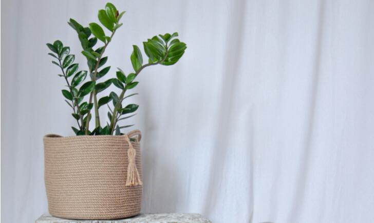 布製の鉢カバーの特徴