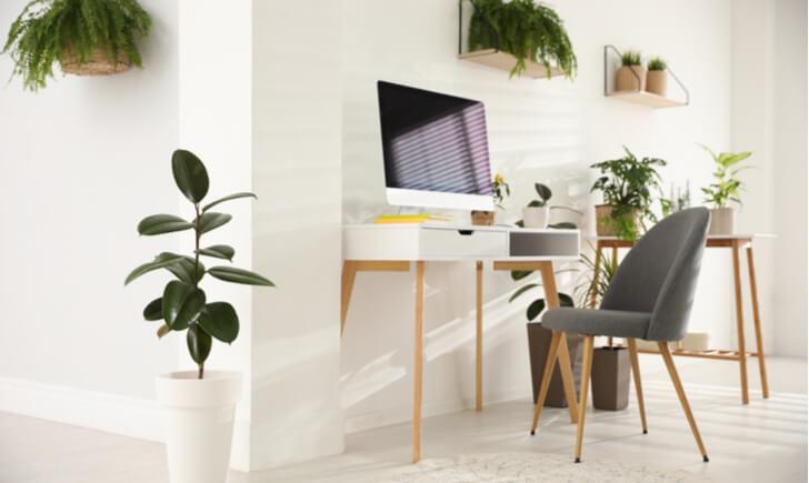 室内をおしゃれに彩る『大型観葉植物』