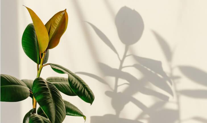 大型観葉植物で室内を自分好みにアレンジしよう
