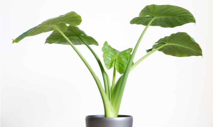 大型観葉植物の選び方