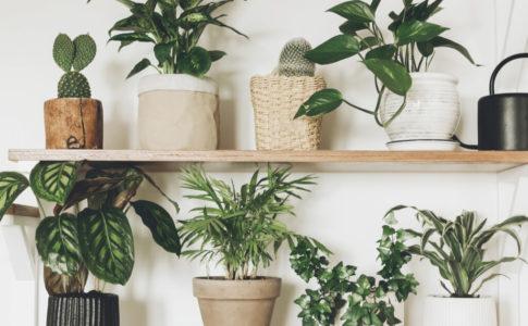 観葉植物 多肉植物