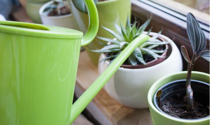 ミニ観葉植物を長く楽しむ育て方