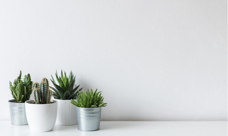 ミニ観葉植物で癒される!部屋に飾るメリット