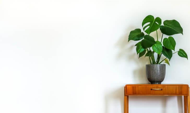 室内の観葉植物に!大型鉢カバーおすすめ5選