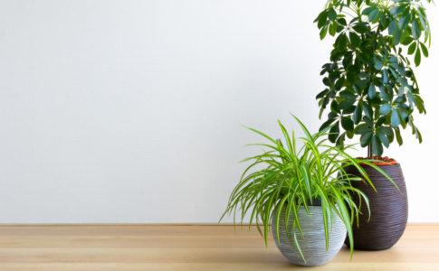 観葉植物 大型