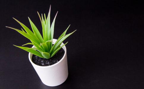 日陰 観葉植物