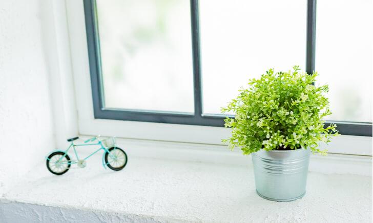 ミニ観葉植物を飾るための最適な場所5つ