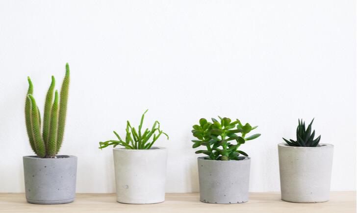 ミニ観葉植物を選んで日常に癒しの緑を取り入れよう