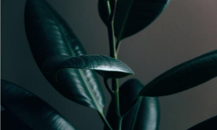 暗い日陰を観葉植物で彩ろう