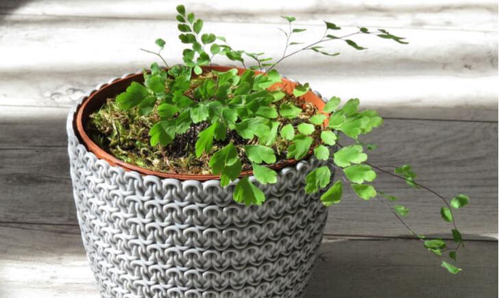 一人暮らしに観葉植物がおすすめの理由