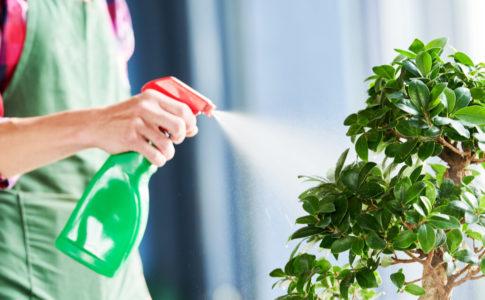 観葉植物はコバエ対策でもっと快適に楽しめる!知っておきたい予防方法と駆除方法