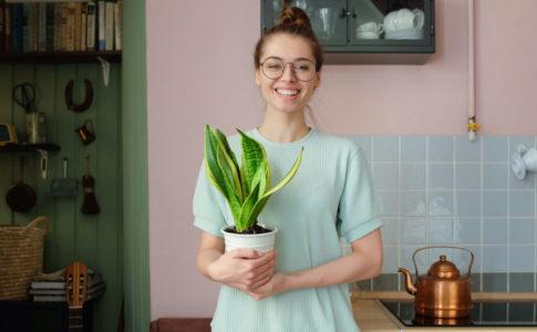 引っ越し祝いに贈りたいおすすめ観葉植物10選!マナーや選び方もご紹介