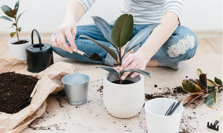 お気に入りのスコップを見つけて観葉植物ライフを楽しもう!