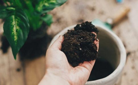 【初心者OK】観葉植物に適した土を配合して作ってみよう!
