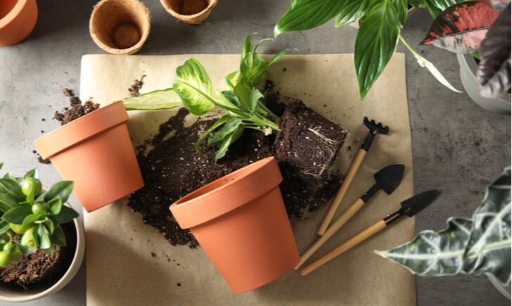 観葉植物に使えるスコップの選び方