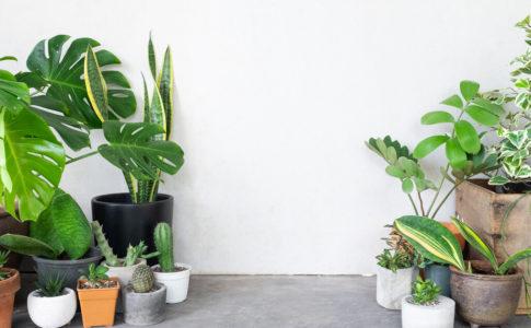 いろいろな観葉植物
