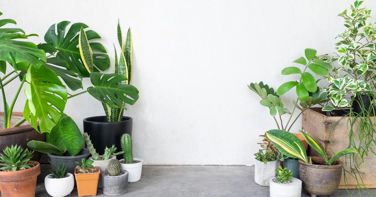 玄関 風水 観葉 植物