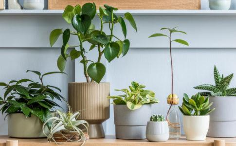 観葉植物におすすめの鉢5選!選び方のポイントと植え替え方法もご紹介