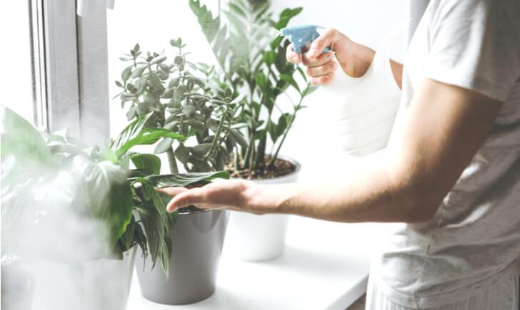 観葉植物を育てるうえで葉水はとても重要