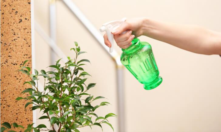 おしゃれで使いやすい霧吹きで観葉植物を大事に育てよう