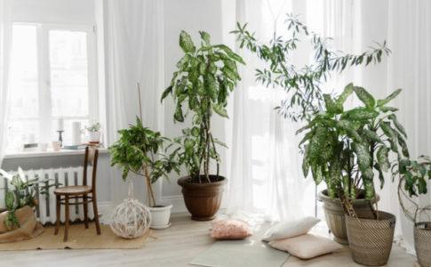 リビング 大型観葉植物