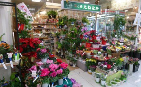 花と緑_たねなかtop