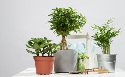 おしゃれな鉢カバーで観葉植物をもっと素敵に!選び方のポイントとおすすめ鉢カバー20選