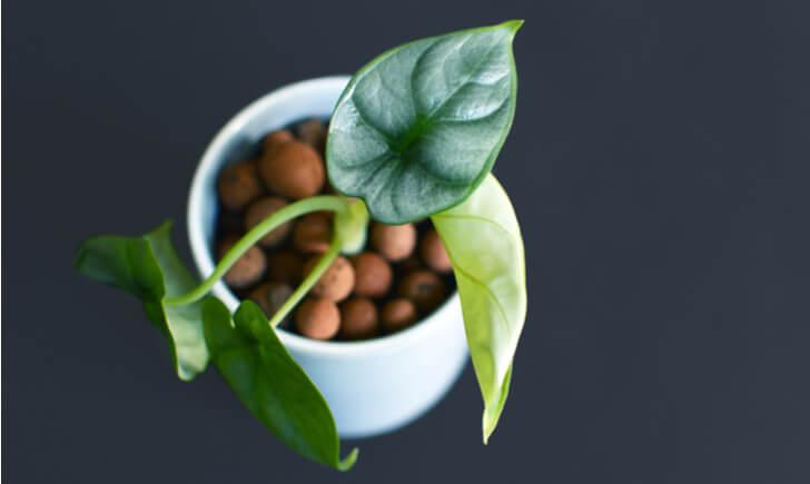 土を使わずに観葉植物を元気に育てるポイント