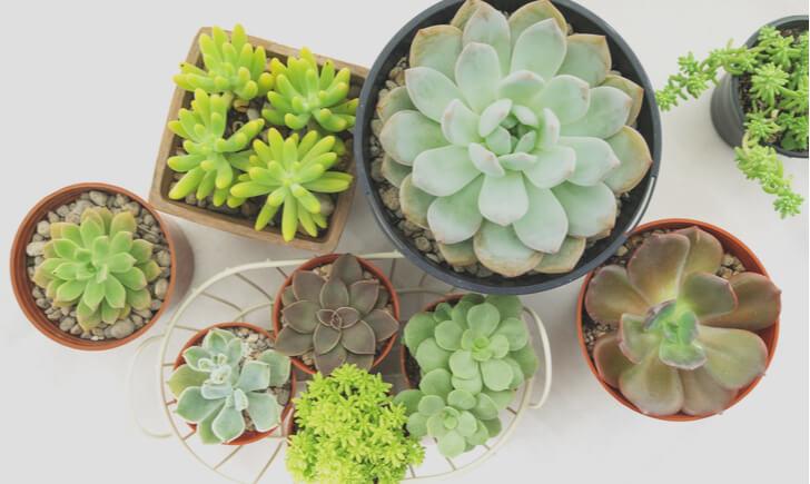 可愛い観葉植物の種類8選