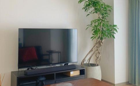 『GOOD GREEN』が提供する観葉植物のレンタル・販売の個人向けサービスに注目!
