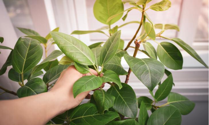 観葉植物レンタルサービスの選び方