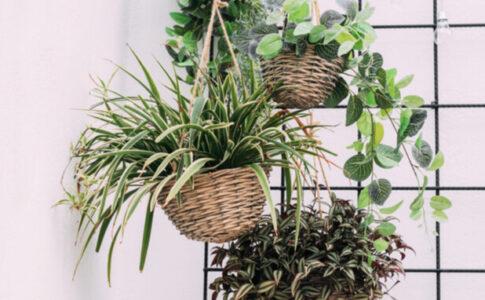 観葉植物 吊るす