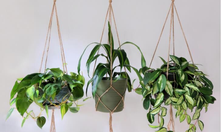 観葉植物のおしゃれで便利な工夫