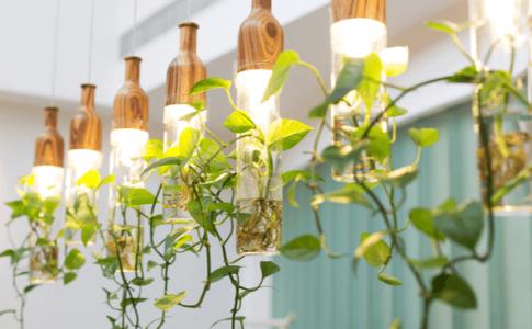 植物ライト