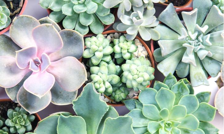 可愛い観葉植物でお部屋をセンスアップしよう