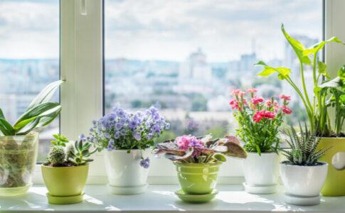 花の咲いた観葉植物