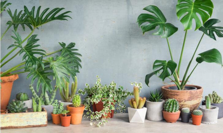観葉植物レンタルサービスを利用するメリット