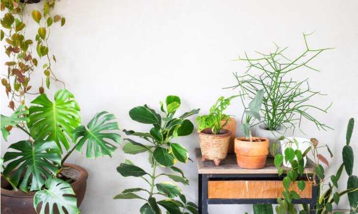 植物の施工を依頼する業者の選び方