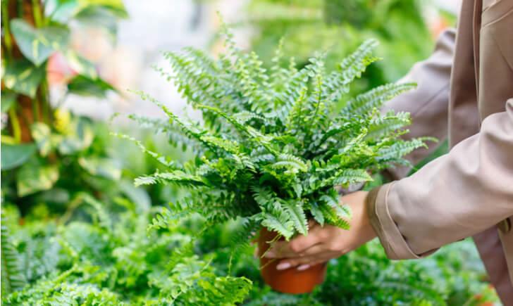 観葉植物ショップの選び方