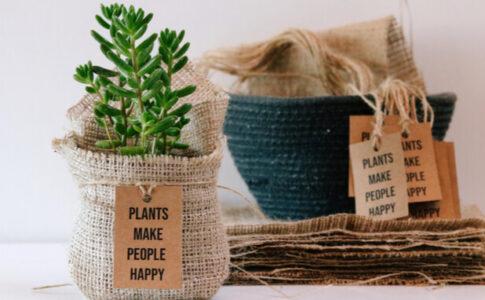 ふるさと納税で観葉植物をもらえる?おすすめの5サイトをチェック!
