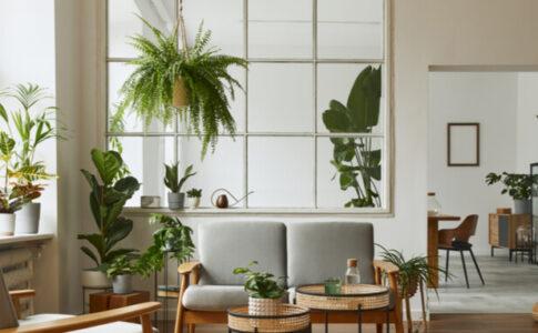 部屋の観葉植物