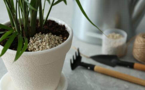 観葉植物 肥料