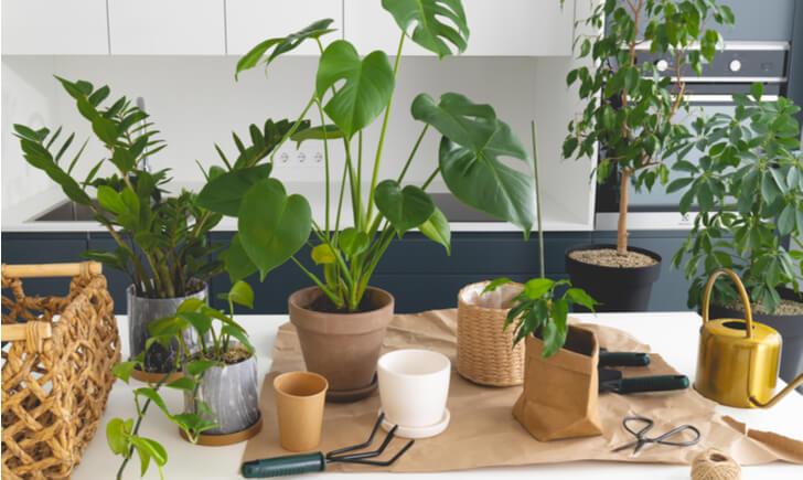 業者に依頼してオフィスに植物を取り入れよう