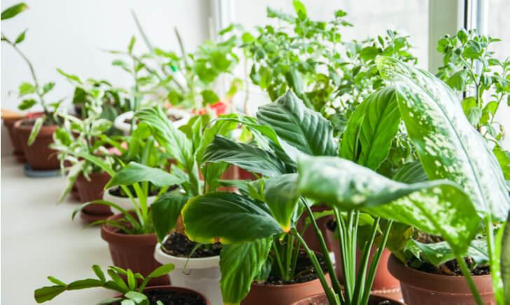 店舗向け【東京近郊】おすすめ観葉植物ショップ10選