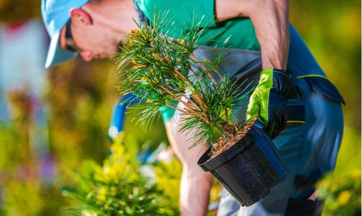 ビジネスに植物を取り入れるなら業者への依頼を