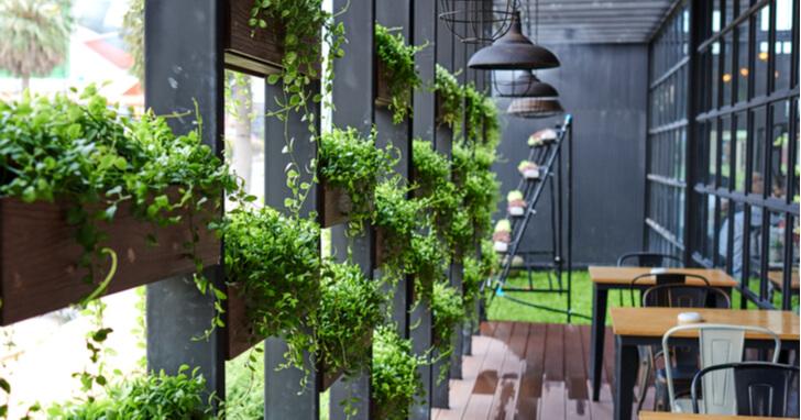 観葉植物 店舗