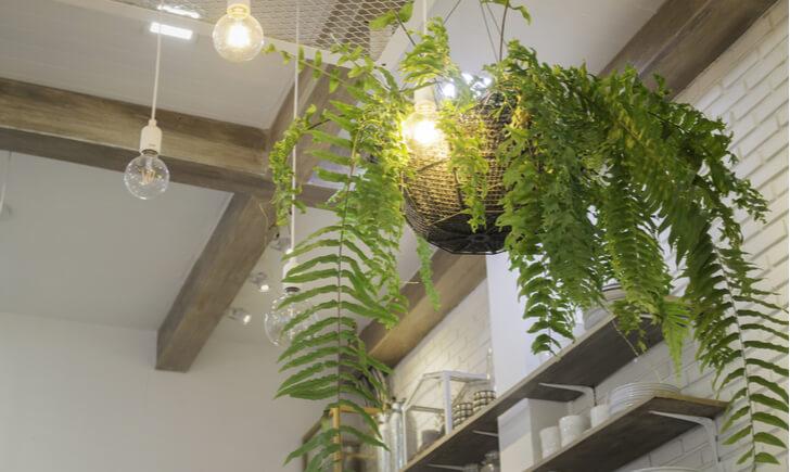 観葉植物を店舗に取り入れてランクアップした空間作りを