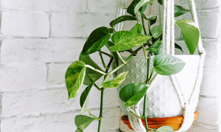 観葉植物のレンタルサービスを活用してオフィスをおしゃれに