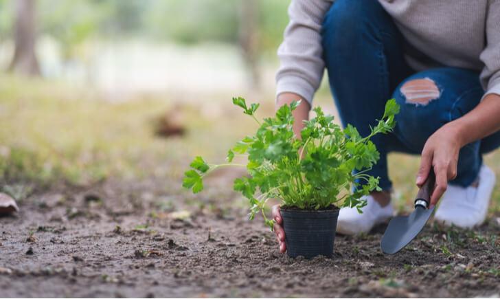 植木とスコップを持つ女性